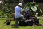 Areyonga Stump grinding services 1