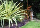 Tropical Landscaping Landscaping Solutions