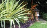 Landscaping Solutions Tropical Landscaping